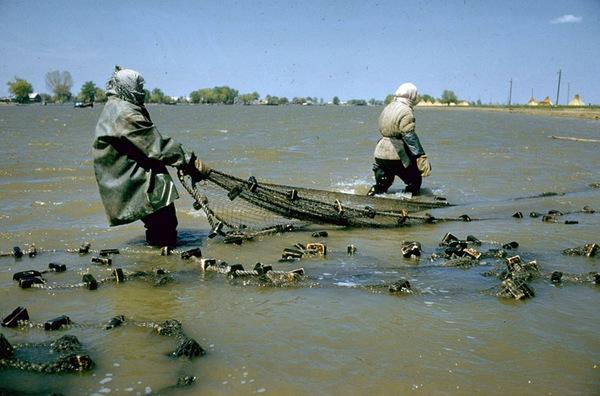 Рыбаки, в том числе женщины, ловят осетра сетью в дельте Волги