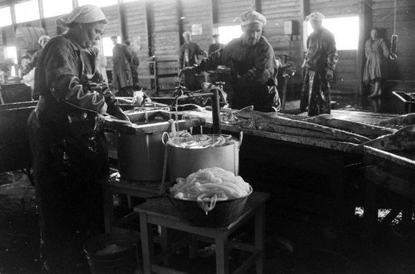 Работники комбината очищают свежевыловленного осетра