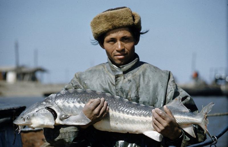 Рыбаки, в том числе женщины, ловят осетра сетью в дельте Волги | Рыбаки, в том числе женщины, ловят осетра сетью в дельте Волги | https://doyounow.ru/images/0001.jpg