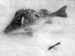 Руководство рыбака для рыбалки на Ахтубе и Волге: Ловля на балансиры