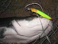 Троллинговые воблеры для рыбалки на Волге рыболовная база