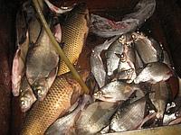 Что нужно знать новичку о рыбалке на поплавочную удочку